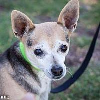 Adopt A Pet :: Ike - Tucson, AZ