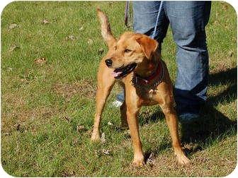 Labrador Retriever Mix Dog for adoption in North Judson, Indiana - Sammie