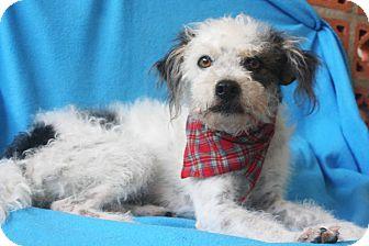 Terrier (Unknown Type, Small) Mix Dog for adoption in Edmonton, Alberta - Rio