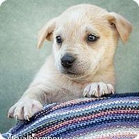 Adopt A Pet :: Gwendolyn - Phoenix, AZ