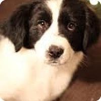 Adopt A Pet :: Heidi - Justin, TX