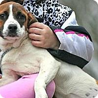 Adopt A Pet :: Dorothy - Spring City, PA