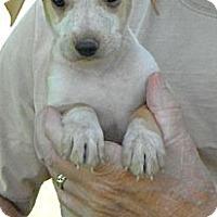 Adopt A Pet :: Rudd-pending adoption - Glastonbury, CT