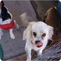 Adopt A Pet :: CARTER - SCOTTSDALE, AZ