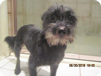 Terrier (Unknown Type, Medium) Mix Dog for adoption in La Mesa, California - TESS