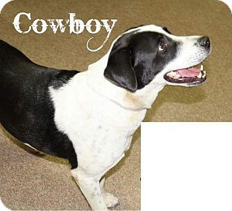 Hound (Unknown Type)/Australian Shepherd Mix Dog for adoption in Danbury, Connecticut - Cowboy