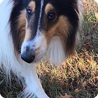 Adopt A Pet :: Tucker - Chesapeake, VA