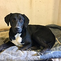 Adopt A Pet :: Pablo - Covelo, CA