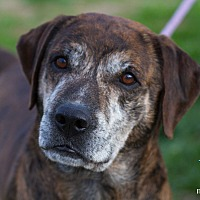 Adopt A Pet :: Mac - Evansville, IN