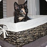 Adopt A Pet :: Tora - Daleville, AL