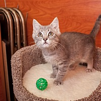 Adopt A Pet :: Teddy - Statesville, NC