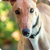 Adopt A Pet :: Lotus - Walnut Creek, CA