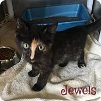 Adopt A Pet :: Jewels - Harrisville, WV