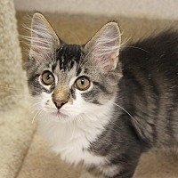Adopt A Pet :: Hunky - Naperville, IL