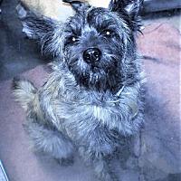 Adopt A Pet :: Addie - San Jacinto, CA