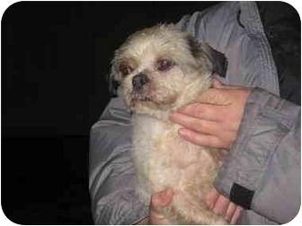 Lhasa Apso Dog for adoption in Elwood, Illinois - Happy