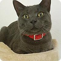 Adopt A Pet :: Samson - Bunnell, FL