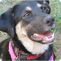 Adopt A Pet :: Cupcake - Windham, NH