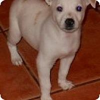 Adopt A Pet :: Sparky - dewey, AZ