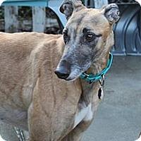 Adopt A Pet :: Reacher - Philadelphia, PA