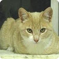 Adopt A Pet :: Cassidy - Modesto, CA