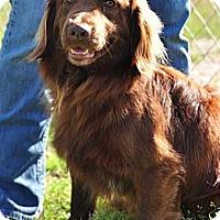 Adopt A Pet :: Oakland - New Canaan, CT