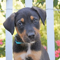 Adopt A Pet :: Hemsworth von Portia - Thousand Oaks, CA