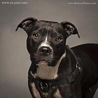 Adopt A Pet :: Juliet - Blacklick, OH