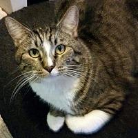 Adopt A Pet :: Angel Baby - San Bernardino, CA