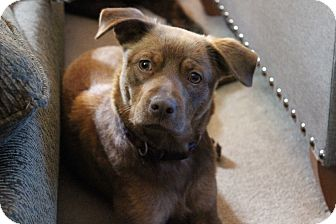 Mixed Breed (Small) Mix Dog for adoption in Providence, Rhode Island - June