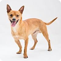 Adopt A Pet :: Phoenix - Alpharetta, GA