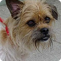 Adopt A Pet :: Forest - Martinsville, IN