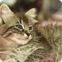 Adopt A Pet :: Abigail - Great Falls, MT
