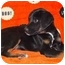 Photo 2 - Catahoula Leopard Dog Mix Puppy for adoption in Broomfield, Colorado - Lily Potter