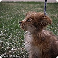 Adopt A Pet :: Margaery - Broomfield, CO
