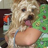 Adopt A Pet :: CHLOE (Adoption Pending) - Southport, NC
