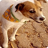 Adopt A Pet :: Tango - Colorado Springs, CO