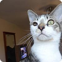 Adopt A Pet :: Oliver - Colmar, PA