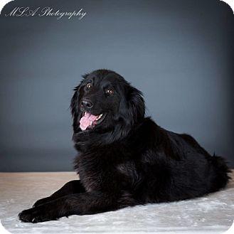 Border Collie Mix Dog for adoption in Edmonton, Alberta - Ila