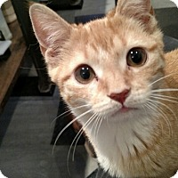 Adopt A Pet :: Biscuit - Brooklyn, NY