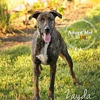 Adopt A Pet :: Zayda - Topeka, KS