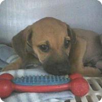 Adopt A Pet :: Miller - Dawson, GA