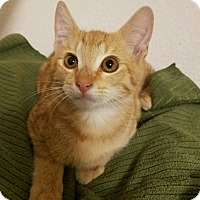 Adopt A Pet :: Jet - Modesto, CA