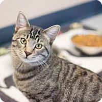Adopt A Pet :: Parker II - Fountain Hills, AZ