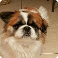 Adopt A Pet :: Bunny boy - San Dimas, CA