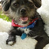 Adopt A Pet :: Eli - Omaha, NE