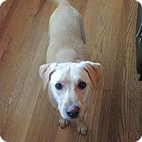 Adopt A Pet :: Gunner #3 - Purcellville, VA
