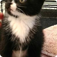 Adopt A Pet :: Oreo and Newman - Randolph, NJ