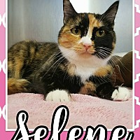 Adopt A Pet :: Selene - Edwards AFB, CA