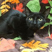 Adopt A Pet :: Meg - Oviedo, FL